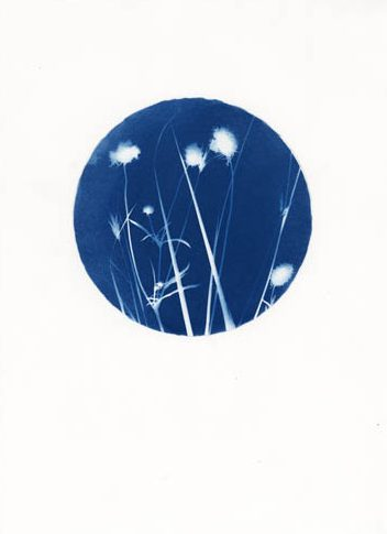 Walking the City Cyanotypes