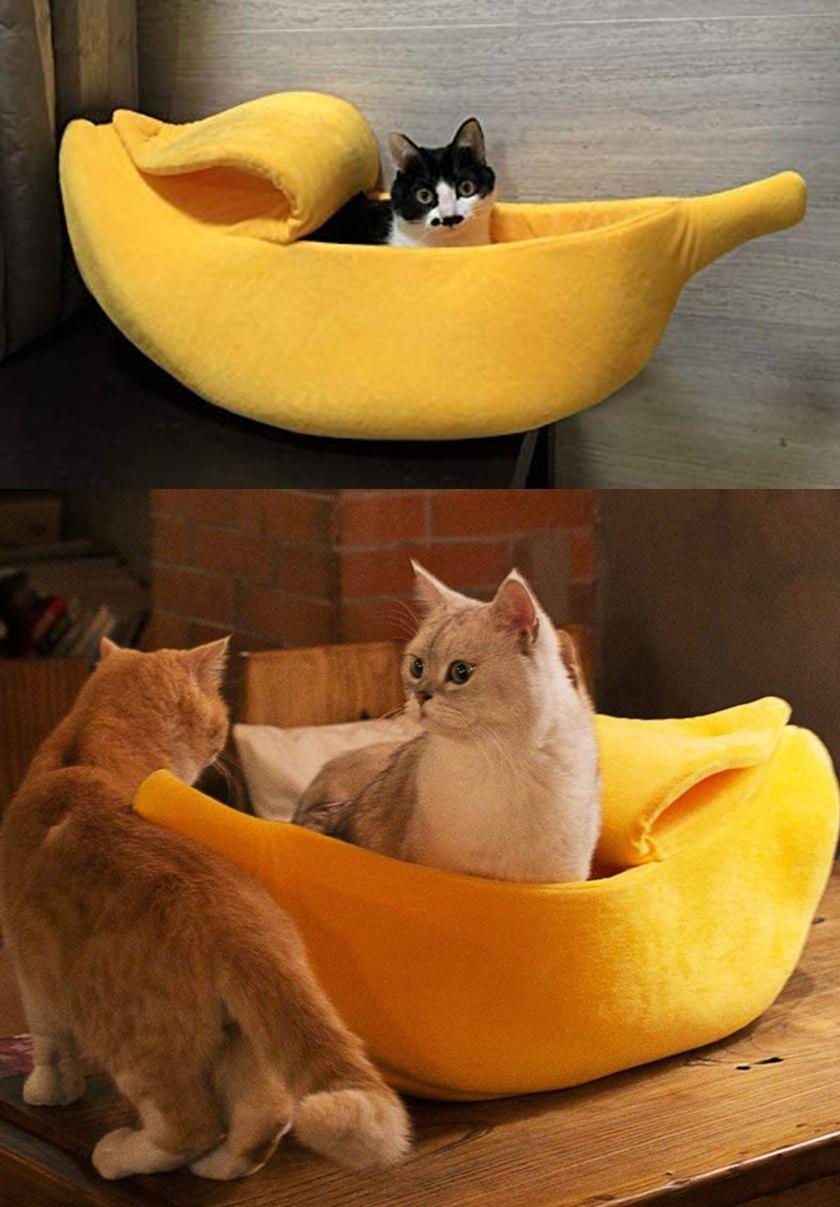 cat bed petsmart