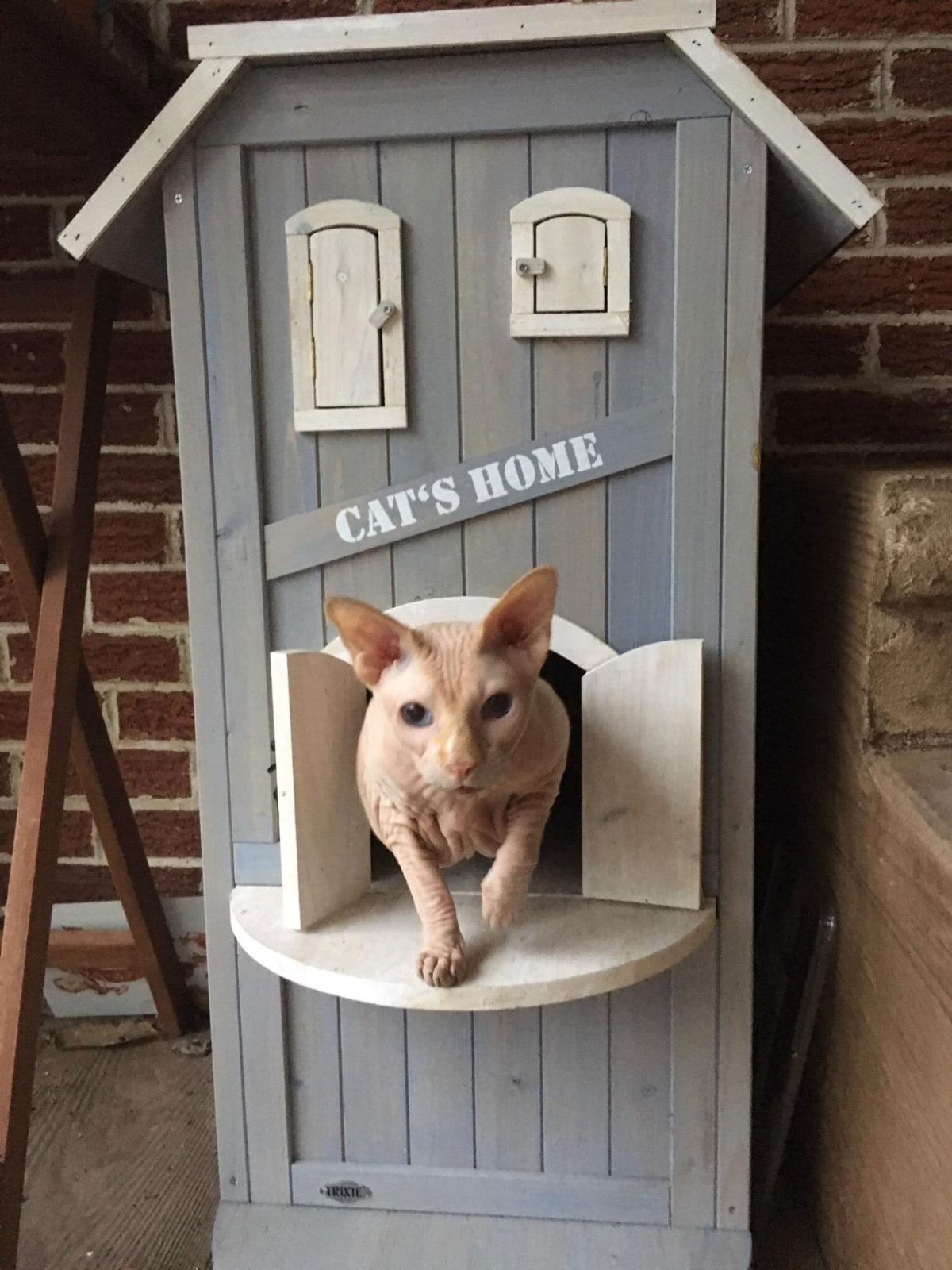 cat house design