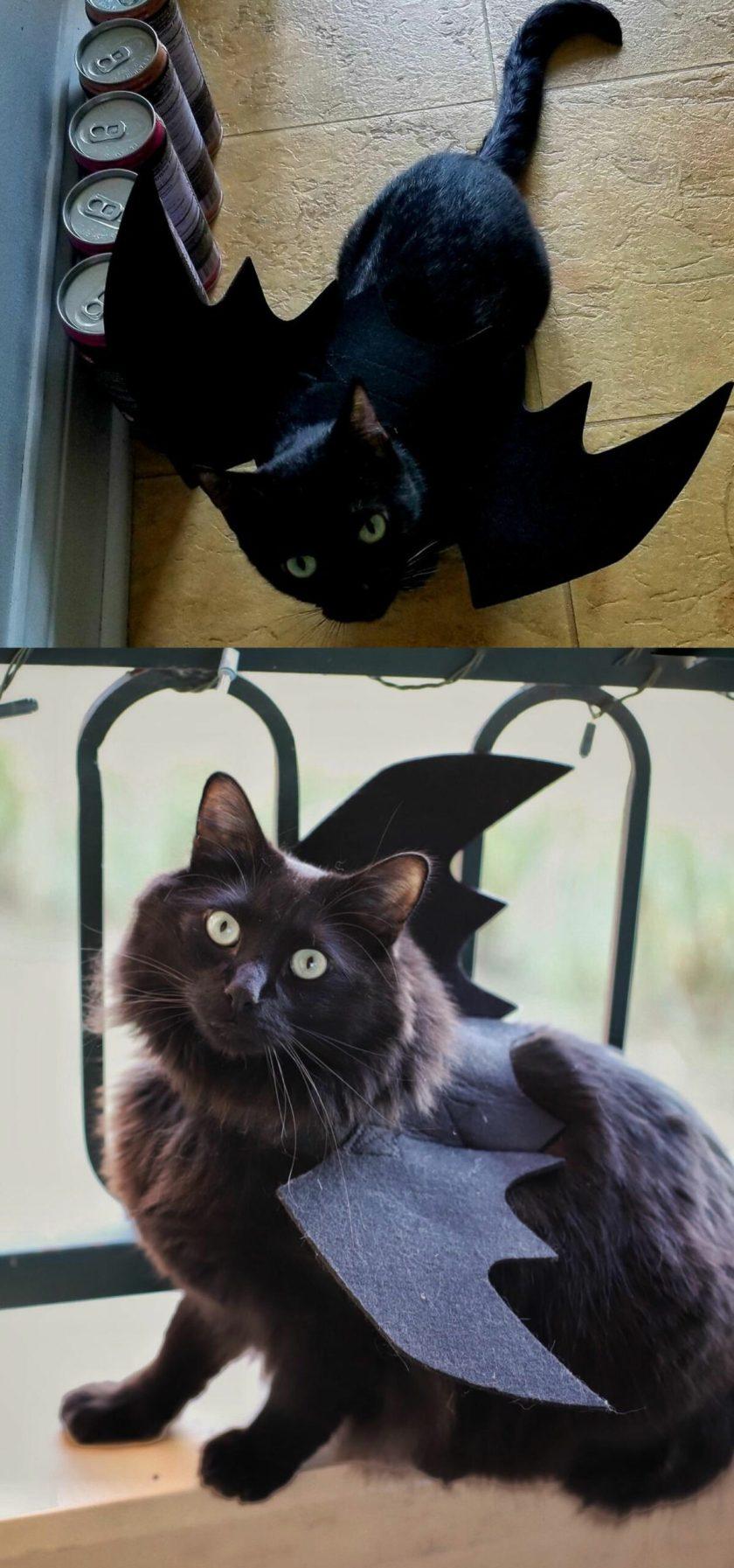 cute cat in costume