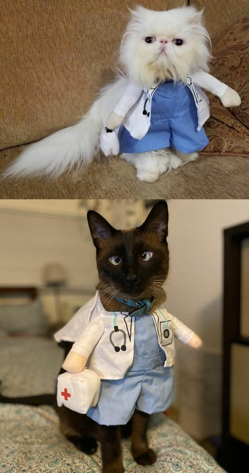 cute toddler cat costume
