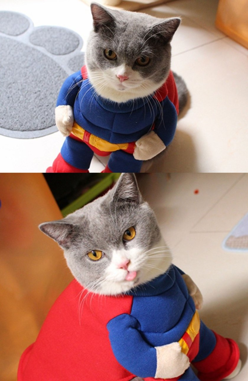 superman cat costume