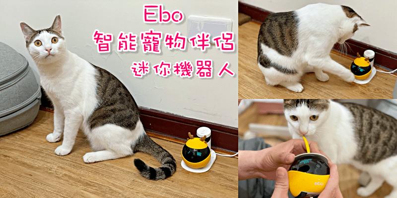 【寵物用品推薦】貓奴必備!讓喵星人在家也不無聊的好夥伴!《Ebo 智能寵物伴侶-迷你機器人》 遠端手機APP操控   寵物攝影機 