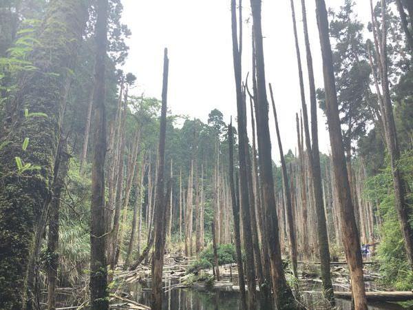 【遊記-台中南投】|忘憂森林|妖怪村| |輕旅行|與姊妹的兩天一夜