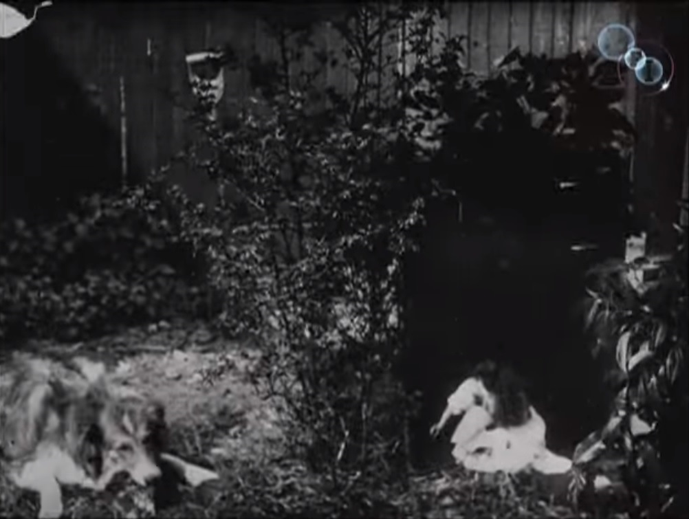 puppy cameo in first alice in wonderland movie