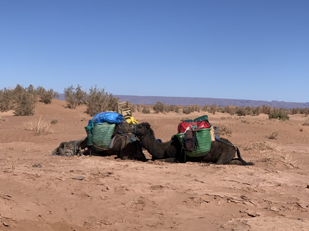 Draa Expedition
