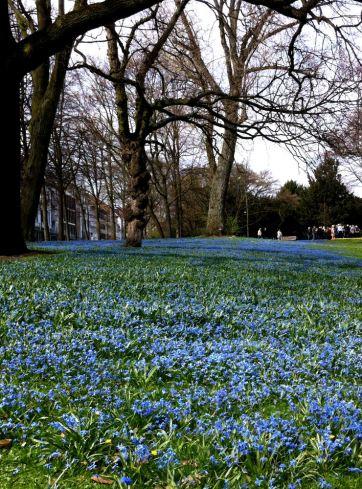 flower blue spring
