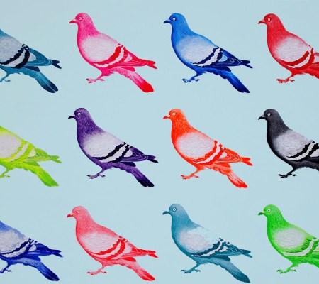 Jodie Glen Martin pigeons