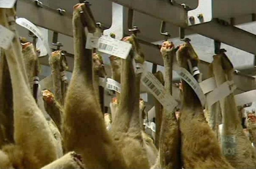 Kangaroos - Killed in trucks and storage 013