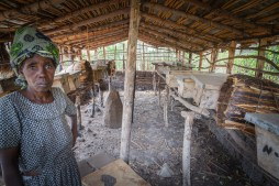 Bee Hive. These hives and other variations are helping poor villages, to earn an income. This woman has purchased a number of cows through her bee keeping operation.