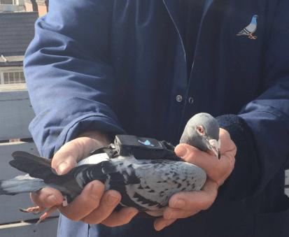 plume-labs-pigeon