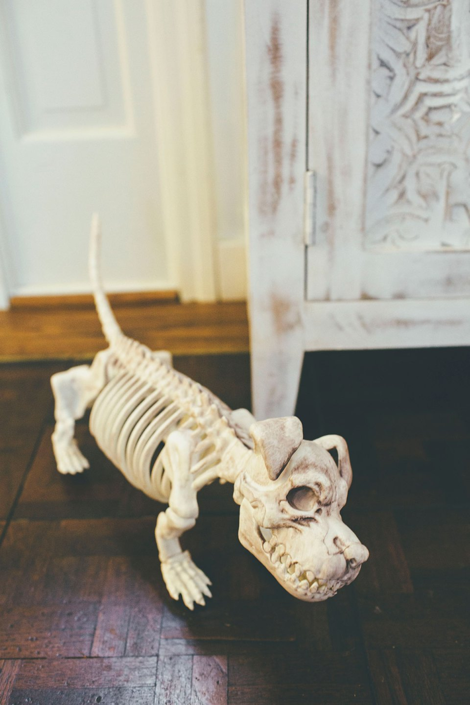 Cute Halloween Skeleton Dog