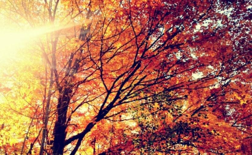 Fall Favorites 🍂🍁