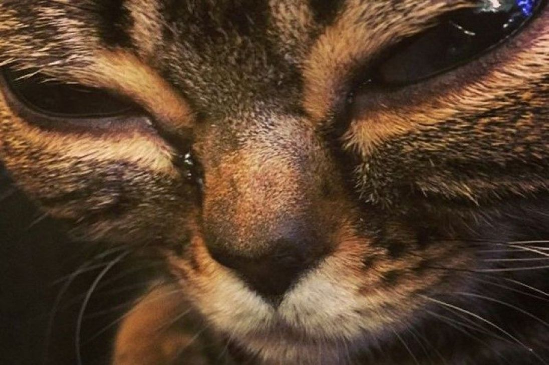 Matilda the alien cat: Meet the glassy-eyed moggy with 30,000 Instagram followers