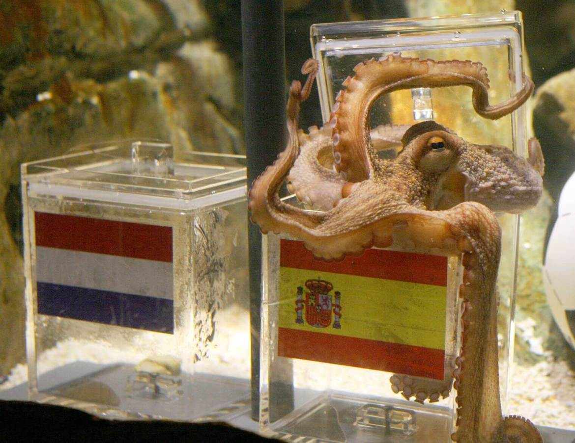 The octopus is so highly evolved scientists think it's an alien 1