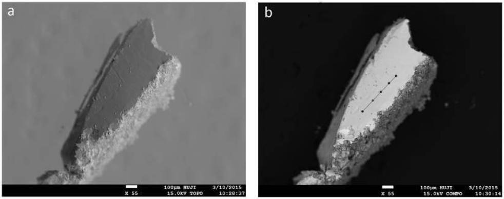Microscopic images of the sampled area where the lead wand was found.