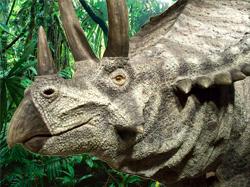 Triceratops last dinosaur