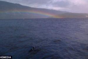 New Nessie sighting and photo hits the Scottish News