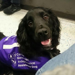 assistance dog uk