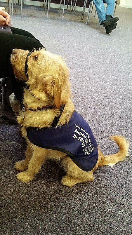 working assistance dog