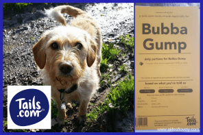 Feeding Your Dog In Winter – Tailor-Made Kibble
