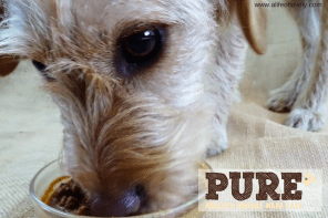 Pure Pet Food For The Pampered Pooch