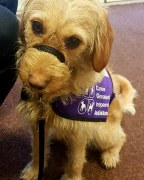 psychological assistance dog