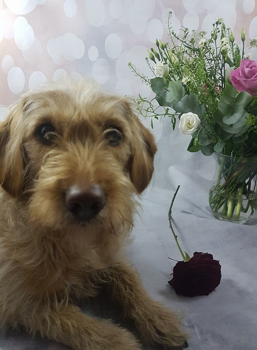 Pawlentine's Day flowers for dog - Bubba Gump - Assistance Dog
