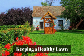Keeping a Healthy Lawn