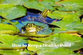 How to Keep a Healthy Pond
