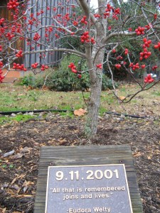 This tree was dedicated by VCCA residents who were there on 9/11.