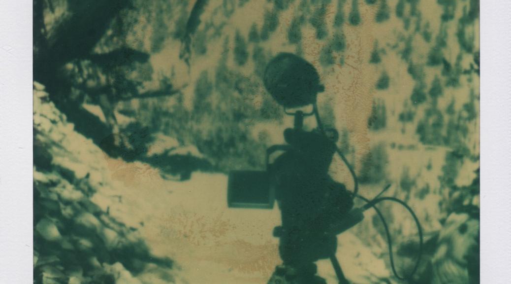 Bristlecone Pine Tree Polaroid