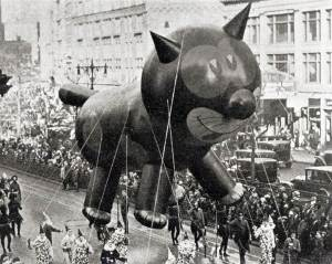 Cat in a parade
