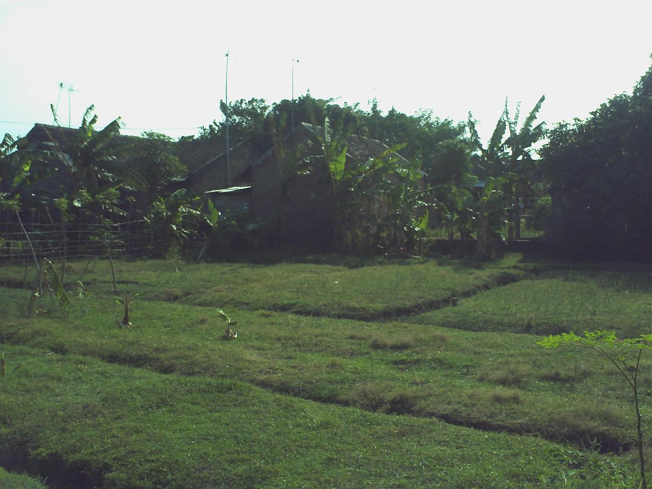 tampak belakang tanah dan rumah yang sudah di bangun warga
