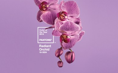 Pantone's 2014 Color of the Year~Radiant Orchid-18-3224