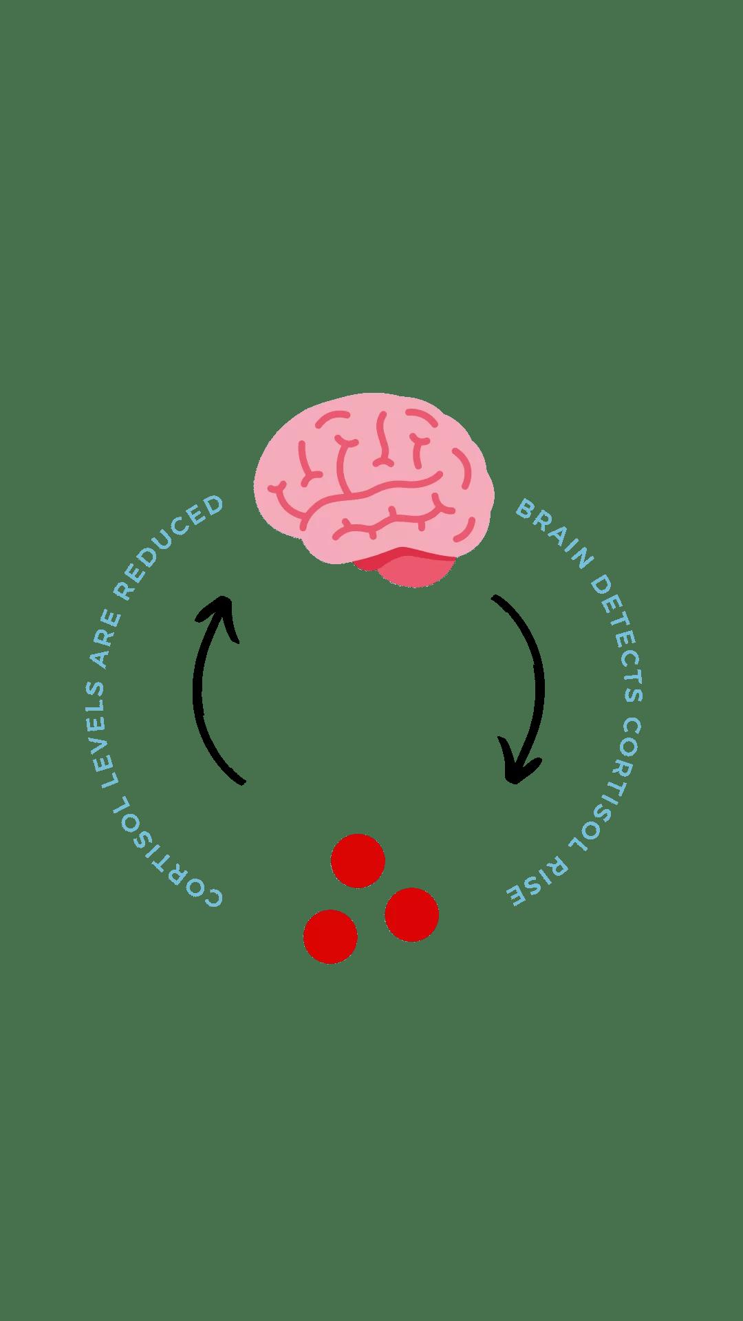 Align Biological Visual