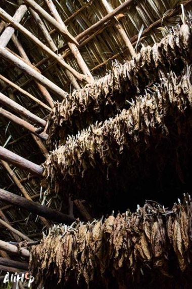 vinales-tabac-cuba-alihop