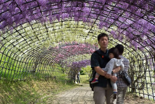 Shooting The Kawachi Fuji Garden Of Japan