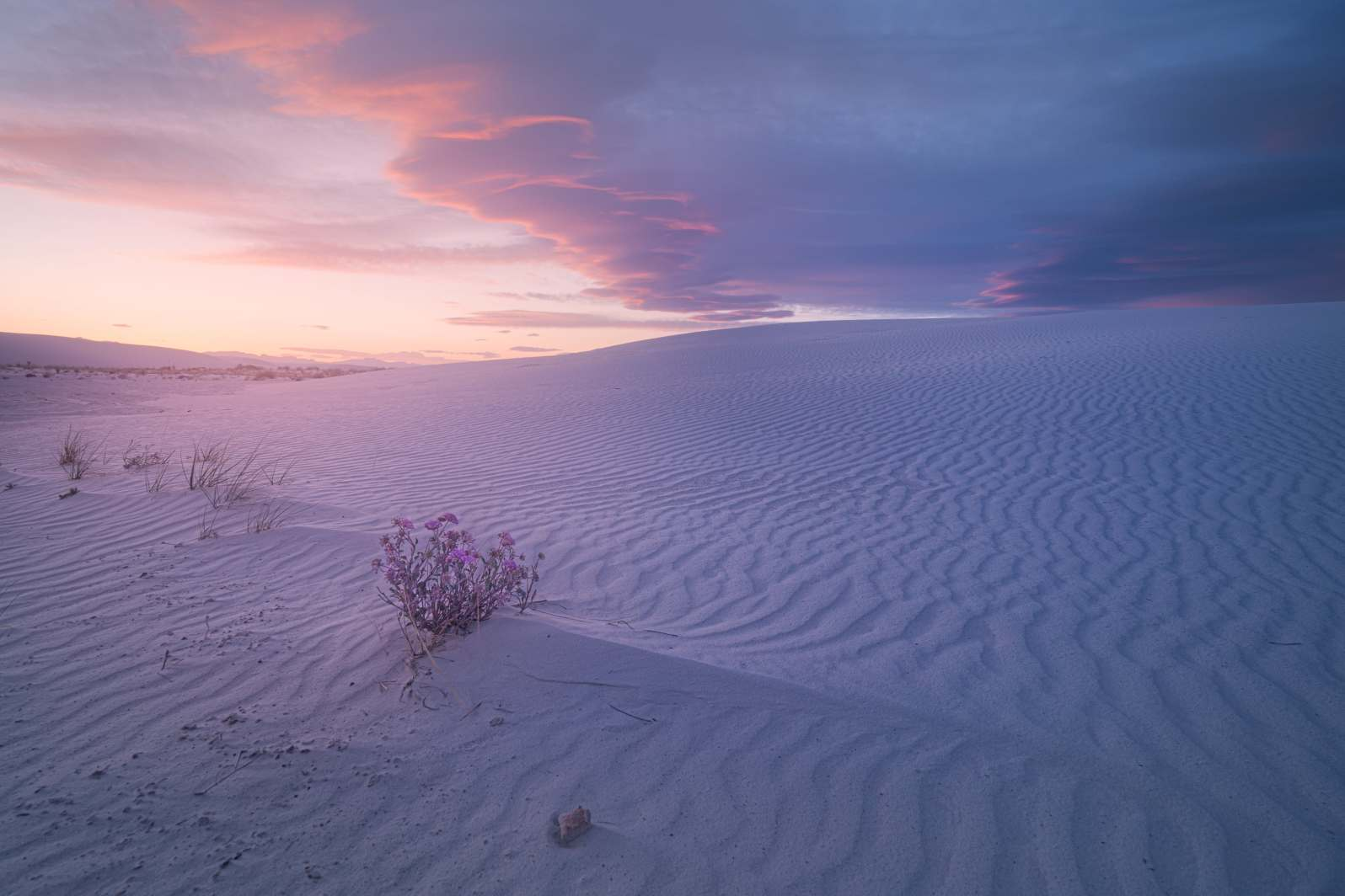 Desert Flowers of White Sands