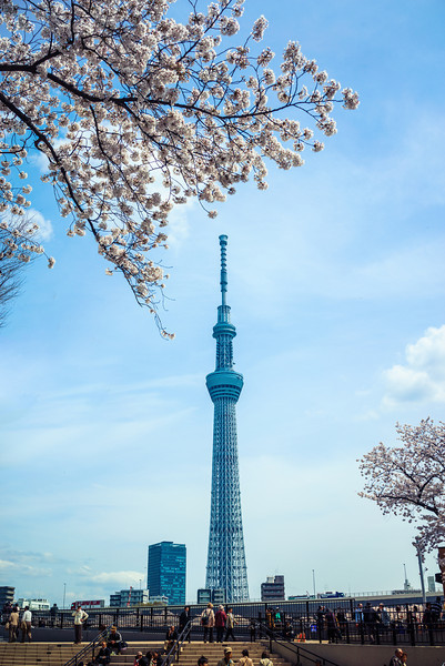 Cherry Blossom Sky Tree