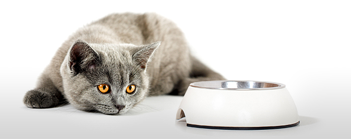 imagen-1-blog-lecciones-gato