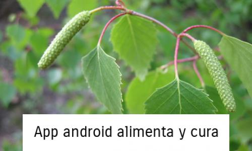 planta medicinal abedul