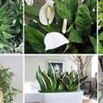 Estas plantas son bombas de oxígeno, debes tener al menos una de ellas para refrescar tu casa!