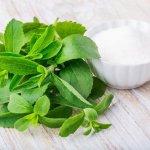 Cómo cultivar stevia en 7 pasos