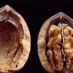 FDA dice que las nueces son drogas ilegales