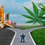 Gran pánico en las grandes empresas farmacéuticas ya que el 80% personas ahora elige el Cannabis en lugar de las píldoras