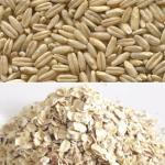 Avena, propiedades y beneficios para la salud de este nutritivo cereal