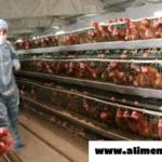¡Finalmente! La FDA admite que la carne de pollo contiene arsénico que causa cáncer