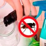 Con solo dos ingredientes, elimina las moscas de tu casa