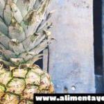 Remedios caseros para la infección urinaria: piña